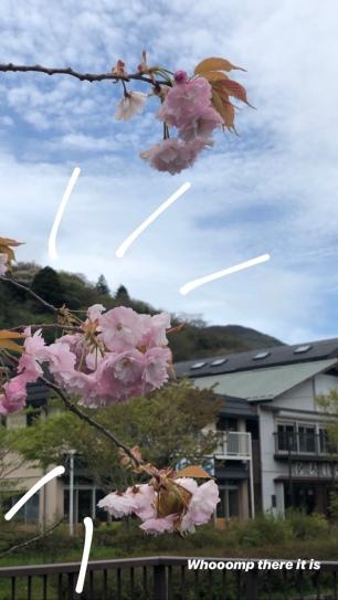 Getting that premium cherry blossom content