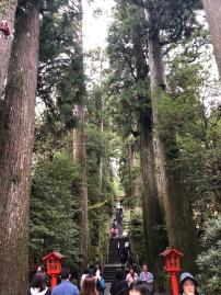 Redwoods at the shrine